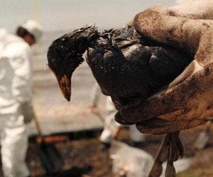 Aguas del Golfo de México altamente contaminadas con el derrame de petróleo