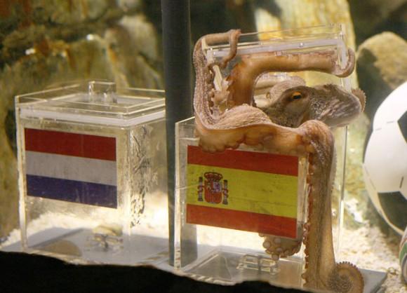 El pulpo Paul vaticina que España será el campeón