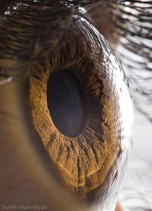 Tus bellos ojos