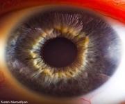 ojos-81