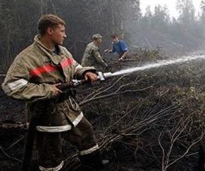 Mundo animal de ciudades rusas al borde de la extinción tras la ola de calor