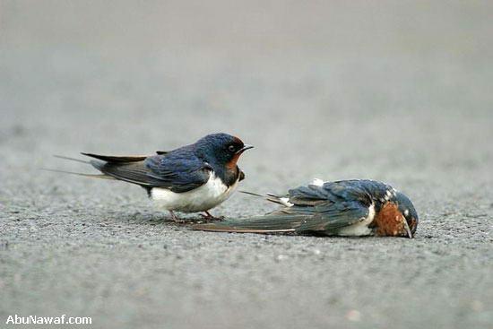 Foto: Wilson Hsu, AbuNawaf.com