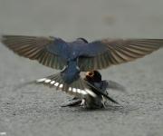Foto: Wilson Hsu, AbuNawaf.com.