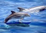 copyright Teo Lucas - SEC delfines 2.jpg