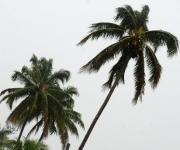 Rachas de ligeros vientos mecieron las palmeras de la ciudad que esta vez no tuvieron que resistir fuertes embates como hace 2 años atrás. Pinar del Río.  14 de octubre de 2010. AIN FOTOS/Abel PADRON PADILLA