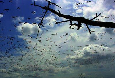 En tiempos de guerras Nucleares, detengamos un instante la mirada en nuestra Madre Naturaleza. Foto: Ismael