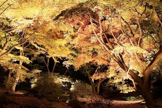 árboles con nanopartículas de oro.