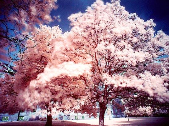 Otro de los árboles