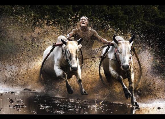 """Buffalo Race""- Chan Kwok Hung"