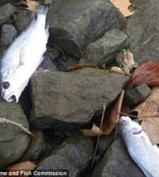 arkansas-peces1