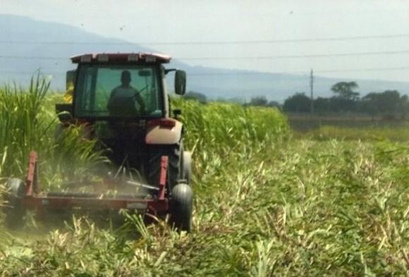 Entrega de tierras a los campesinos en Cuba. Foto: Archivo