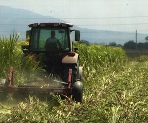 En producción mayoría de las tierras entregadas en usufructo