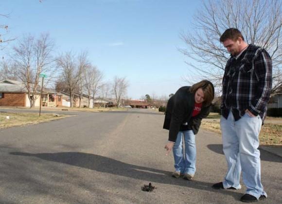 Imagen sin fechar facilitada por el diario Daily Citizen este 3 de enero de 2011 en la que se observa a dos residentes locales al examinar un mirlo muerto de los que se encuentran a lo largo de un barrio de Beebe, Arkansas (EEUU). Según ha informado el Gobierno de Arkansas, el 1 de enero de 2011, alrededor de 4.000 mirlos cayeron muertos an un perímetro de 1,5 millas. Las autopsias indican que los pájaros murieron por traumatismo interno pero se desconocen las causas. EFE//Warren Watkins/The Daily Citizen