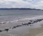Un grupo de excursionistas se encontró con esta imagen cuando paseaba por la bahía de Mason, en la Isla Sur de Nueva Zelanda. Foto: BBC Mundo
