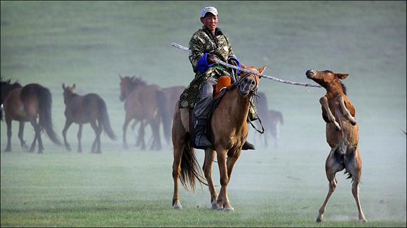 """Mongolia es un país que ofrece infinitas oportunidades por lo variado de su territorio. Las sabanas del país están ocupadas por estos """"vaqueros"""" que conviven con los caballos salvajes que se expresan en libertad. Foto: Timothy Allen/ BBC Mundo"""