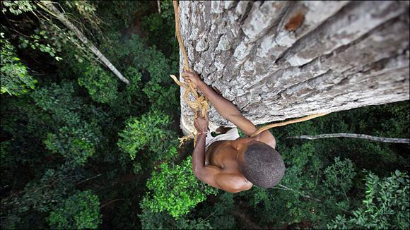 """En el corazón de la República Centroafricana se encuentra la tribu de los BaAka. """"Es asombroso como Mongonje consigue ascender por el árbol para recolectar la miel con la única ayuda de una liana que le envuelve y le mantiene unido al tronco"""". Foto: Timothy Allen/ BBC Mundo"""