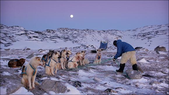 """Los medios de transporte son otros, existiendo una especial interacción con los animales que te ayudan a sobrevivir. Con la luna de fondo, este hombre prepara su vehículo y a sus """"motores"""". Foto: Timothy Allen/BBC Mundo"""