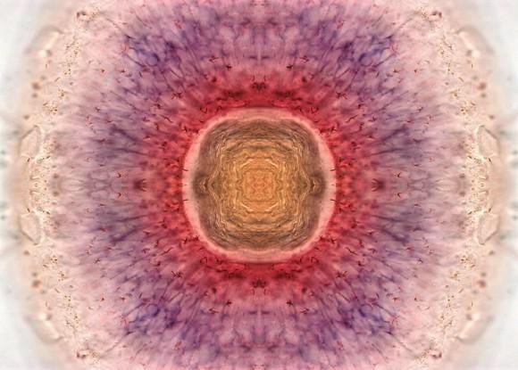 """""""Amanecer en el ojo"""". Foto: Kara Cerveny, del laboratorio Steve Wilson, de Gran Bretaña"""