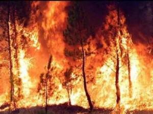 Incendio forestal. Foto no relacionada con el hecho