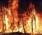 incendio-forestal1