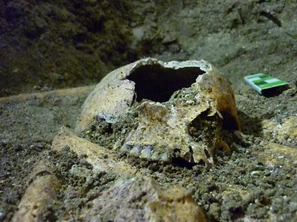 Único cráneo encontrado con piezas dentarias