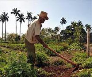 Cuba pone en marcha estrategias agrícolas para minimizar impacto de la sequia