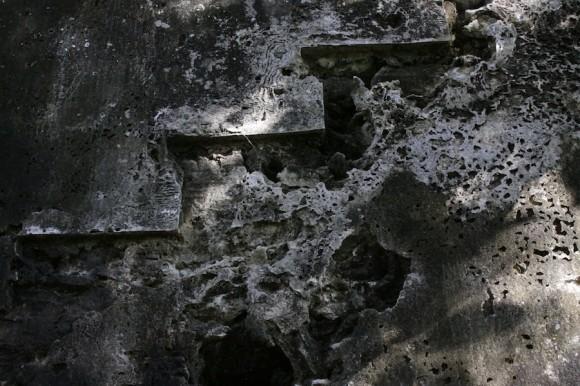 El monte, actual morador de la antigua casa de vivienda. Foto: Alejandro Ramírez