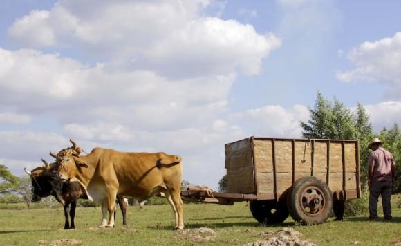 Transporte. Foto. Alejandro Ramírez