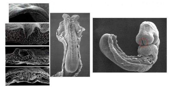El origen de la Vida (Fotos)