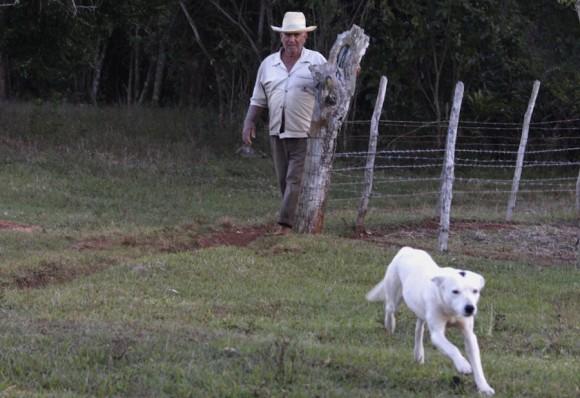 """""""Cariñoso no era nombre para un perro que pastorea el ganado y se expone a los peligros del oficio"""". Foto: Alejandro Ramírez Anderson"""