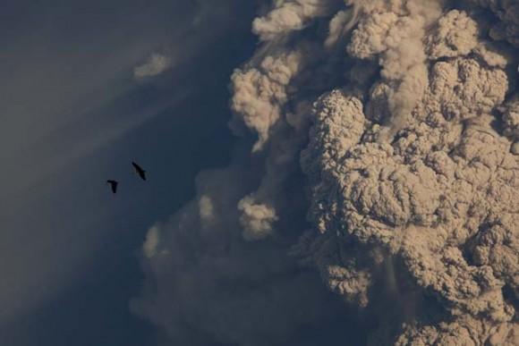Dos aves planean hoy, domingo 5 de junio de 2011, frente la columna de humo provocada por una explosión en el complejo volcánico Puyehue - Cordón Caulle en Riñinahue (Chile). Las autoridades chilenas detectaron una disminución en la actividad sísmica del lugar, del que emana una nube de humo y cenizas que hasta ahora se ha dirigido hacia Argentina y que en las próximas horas puede afectar con más fuerza a territorio chileno. EFE/Ian Salas