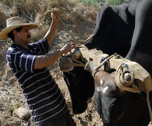 Retiran tierras en usufructo a 9.000 cubanos por deficiente aprovechamiento