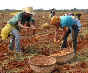 Creció producción agropecuaria en Cuba, pero aún no alcanza cifras de hace ocho años.