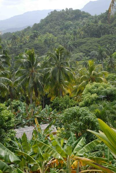 Naturaleza típica de las montañas de Baracoa, en Guantánamo, Cuba. AIN FOTO/Oscar ALFONSO SOSA
