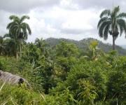 Característica de las montañas de Baracoa, en Guantánamo, Cuba. AIN FOTO/Oscar ALFONSO SOSA