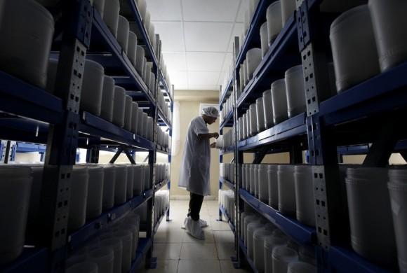 Un técnico muestra una muestras de veneno de escorpión en los laboratorios Labiofam en Santa Clara, provincia Villa Clara en el centro de Cuba, alrededor de 280 km (175 millas) de La Habana 05 de agosto 2011. El veneno se utiliza para hacer una medicina contra el cáncer que Cuba ha desarrollado y está empezando a vender en Cuba y otros países. REUTERS / Enrique De La Osa