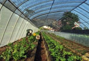 La agricultura debe ser tema en Cumbre sobre Cambio Climático, según científicos