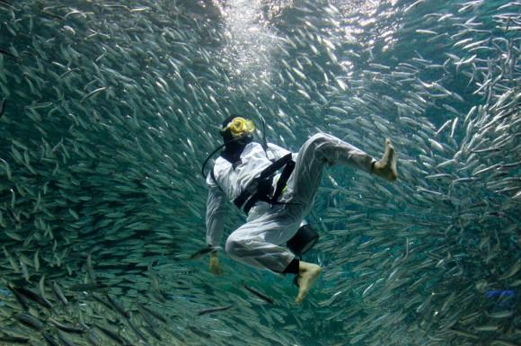 sardina-10