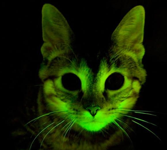 gatos fluorescentes