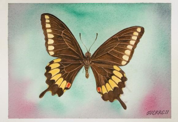 Mariposa. Dibujo de Antonio Guerrero.