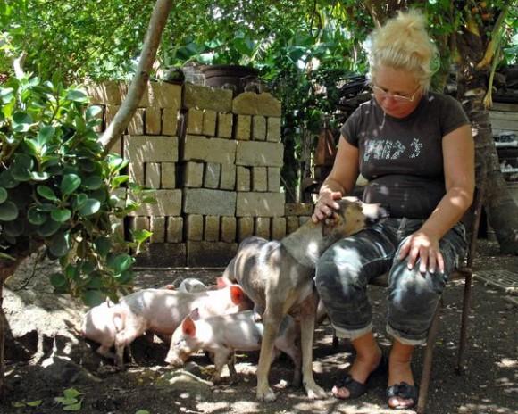 Eida Fernández, dueña de Yeti, una perra criolla criada en un barrio camagüeyano ha tomado en adopción cerditos que amamanta y cuida con esmero, en Camagüey,  el 23 de agosto de 2011.   AIN FOTO/Rodolfo BLANCO CUE/
