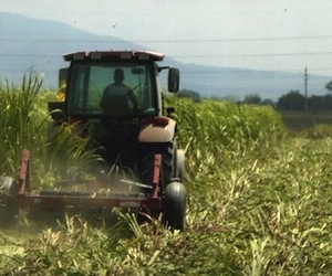 Cuba: Casi al 80 por ciento de explotación tierras en usufructo
