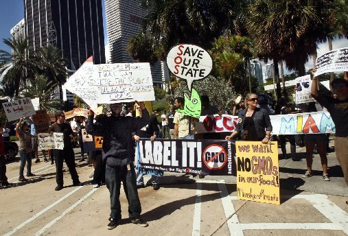 occupy-miami-1