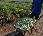 Empresarios agrícolas de EE.UU. promueven fin del bloqueo a Cuba