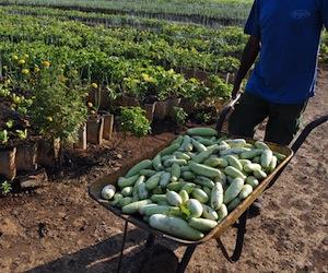 Agricultura Cuba