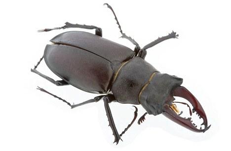 """""""Exoesqueletos - su"""" armadura de insectos """"- es duro y ligero, la protección de los insectos de los daños sin sobrecargarlos demasiado. Ahora, investigadores de Harvard han crecido un material similar - 'shrilk' - que es barato, ligero y tan duro como la aleación de aluminio"""