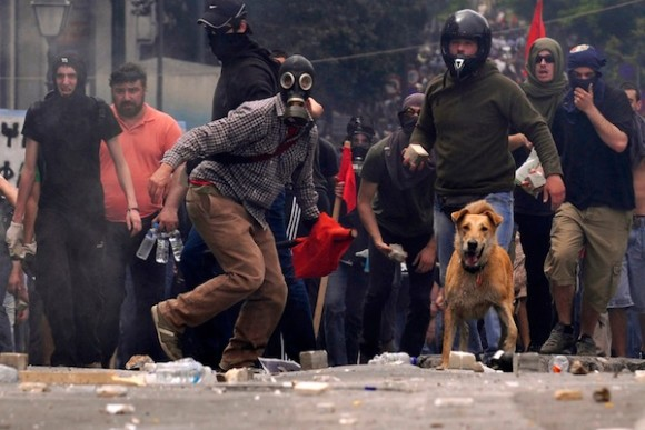 Greece Street Dog