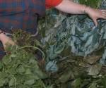 plantas-medicinales-yerbas
