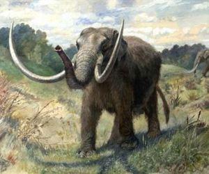 Encuentran células de mamut útiles para posible clonación