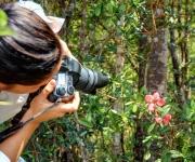 Por su valor endémico, el Jazmín del Pinar (Euphorbia podocarpirolia) considerada la Flor de Holguín, acapara el interés de visitantes nacionales y extranjeros del Parque Nacional Pico Cristal, en la provincia de Holguín, Cuba, el 13 de abril de 2012. AIN FOTO/Juan Pablo CARRERAS.